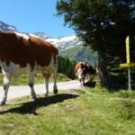 Bramberg, Wildkogel, kamer, sneeuw, zon, mountainbiken, Hollersbach, Kitzbüheler Alpen, Nationalpark, Hohe Tauern, Krimmler watervallen, Smaragdbahn